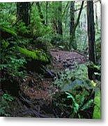 Redwood Forest Scene 1 Metal Print