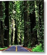 Redwood Highway Metal Print