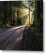 Redwood Magic Metal Print