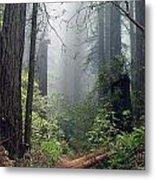 Redwood Mist Metal Print