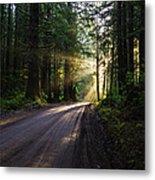 Redwood National Park Morning Metal Print