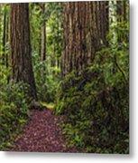 Redwood Path Metal Print