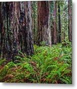 Redwood Sentinels Metal Print
