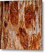 Redwood Spirit Metal Print