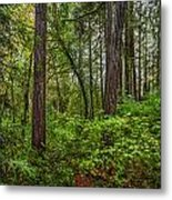 Redwoods 2 Metal Print