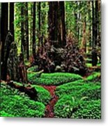 Redwoods Wonderland Metal Print by Benjamin Yeager