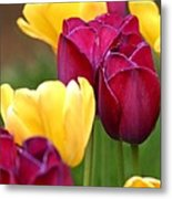 Redyellowtulips6728 Metal Print