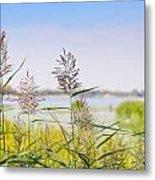 Reed Flowers Metal Print