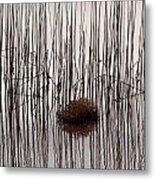 Reed Reflection Metal Print by T C Brown