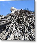 Reed Roof Metal Print