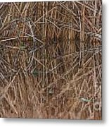 Reed Water Reflection Metal Print