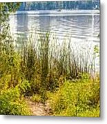 Reeds And Plants Close To The Shore Metal Print