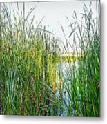 Reeds And River Metal Print