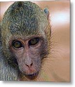 Reese's Monkey Portrait Metal Print