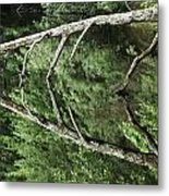 Reflected Branch Metal Print