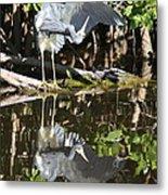 Reflected Great Blue Heron Metal Print
