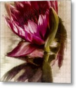 Reflected Waterlily Metal Print by Jill Balsam