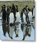 Reflecting King Penguins Metal Print