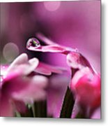 Reflecting On Pink Metal Print