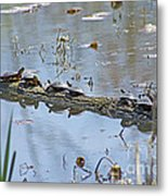 Reflecting On The Nice Spring Weather Metal Print