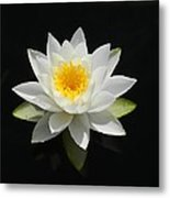 Reflecting Water Lilly IIi Metal Print