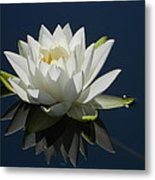Reflecting Water Lilly Metal Print