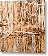 Reflection 2 Metal Print by BandC  Photography