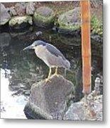 Reflection Of A Black-crowned Night Heron Metal Print