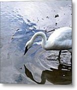 Reflection Of A Lone White Swan Metal Print
