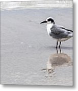 Reflection Of A Tern Metal Print