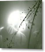 Reflection Of Grass And Sun Metal Print