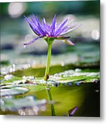 Reflection Of Life Metal Print