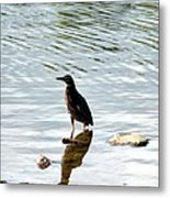 Reflection Of The Green Heron Metal Print