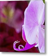 Reflections In A Water Drop Metal Print