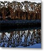 Reflections In First Light Metal Print