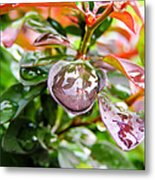 Reflections In Raindrops Metal Print