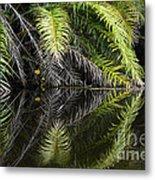 Reflections Marimbus River Brazil 2 Metal Print