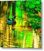 Reflections Of A Mallard Duck Metal Print