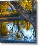 Reflections Of A Pond 2 Metal Print