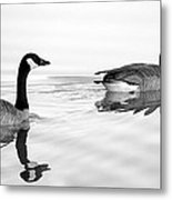 Reflections Of Geese Metal Print