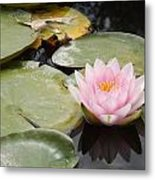 Reflections Of Lily Metal Print