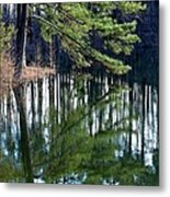Reflections Of The Pine Metal Print