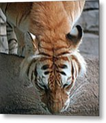 Reflections Of The Wild Metal Print