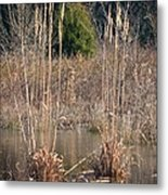 Reflections Of Winter Past 2014 Metal Print