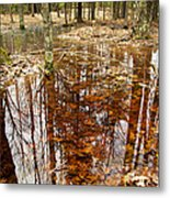 Reflections On A Forest Floor Metal Print