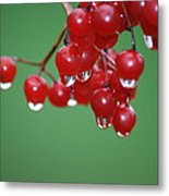Reflective Red Berries  Metal Print