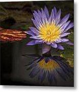 Reflective Water Lily Still Life Metal Print