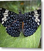 Regal Blue Butterfly Metal Print