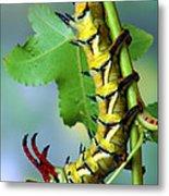Regal Moth Caterpillar Metal Print