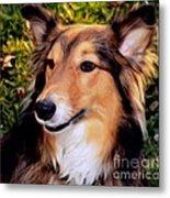 Regal Shelter Dog Metal Print